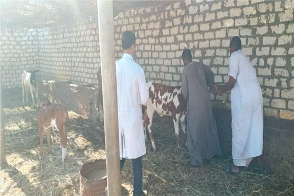 تحصين أكثر من 4.3 مليون رأس ماشية