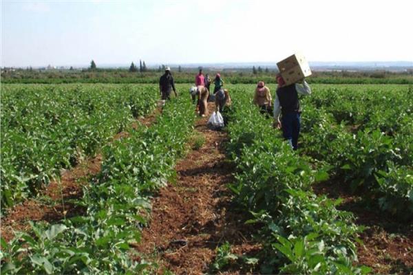 الزراعة تواصل جولاتها الميدانية