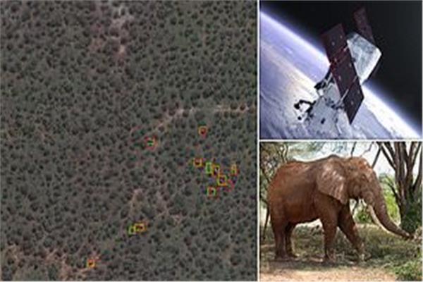 صورة استخدام الأقمار الصناعية لتتبع ومعرفة الحيوانات المهددة بالانقراض