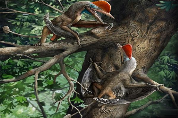 صورة اكتشاف زواحف طائرة «فريدة» عاشت بالصين قبل 160 مليون سنة
