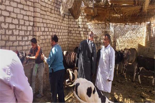 حملات الزراعة لتحصين الماشيه ضد الجلد العقدي وجدري الأغنام