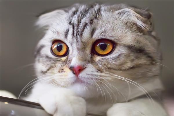 تعيين القطة كوكو ضابطة شرطة