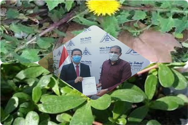 الدكتور ناصر الجيزاوى القائم بأعمال رئيس جامعة بنها
