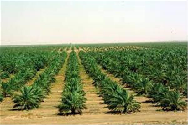 الرقعة الزراعية