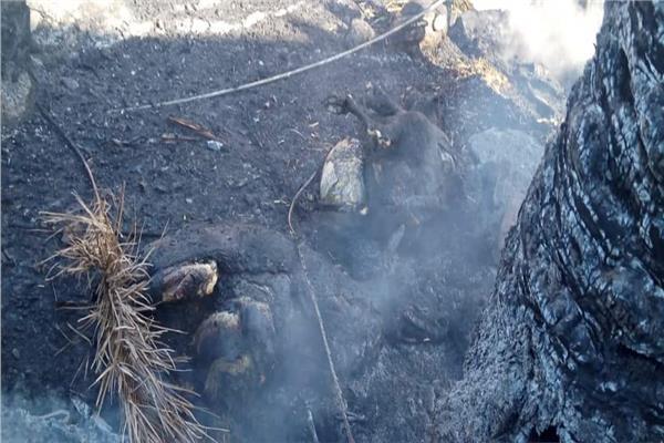 حريق يدمر 11منزلا  و19 حوش بقرية العضايمة بإسنا