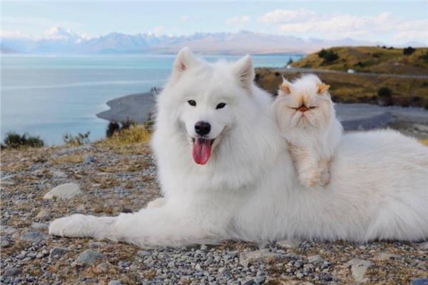 ابتسامة كلب وتكشيرة قط