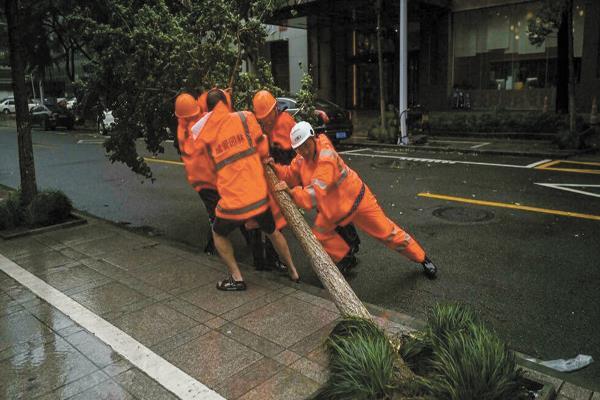 عمال يحاولون إزالة شجرة سقطت فى الشارع جراء الرياح الشديدة بشرق الصين