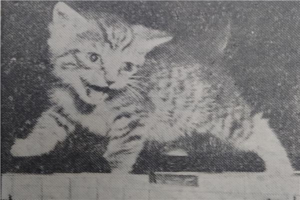 صورة ارشيفية
