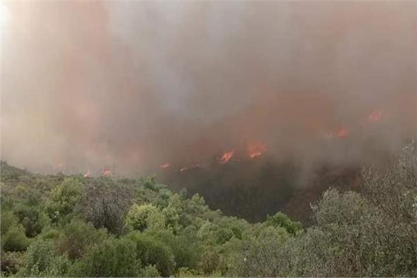 تجدد حرائق الغابات في الجزائر