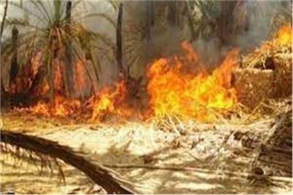 حريق هائل فى مزرعة