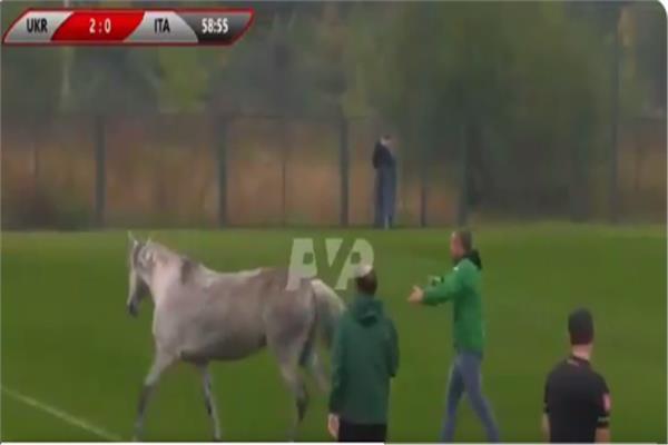 حيوانات تقتحم ملعب مباراة