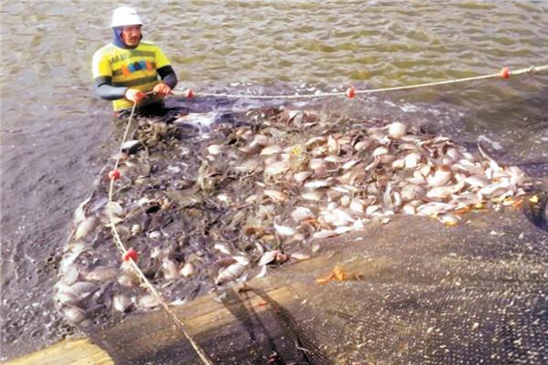 مشروعات الاستزراع السمكي