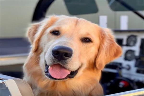 كلب يسافر على متن طائرة خاصة لمدة طويلة