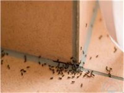 7 حيل بسيطة لحياة أسهل.. «الخيار» يخلصك من النمل