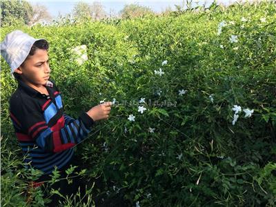 حكايات| قرية نجريج «العالمية».. «الياسمين» الذي سبق محمد صلاح لأوروبا