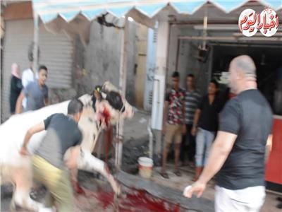 فيديو | ذبح الأضاحى في الأميرية بعد صلاة عيد الأضحى