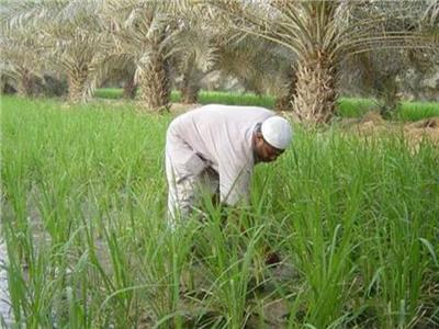عيد الفلاح| اليوم..تحل الذكرى الـ 66  للقضاء على «الإقطاع»