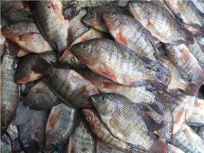أسعار الأسماك في سوق العبور اليوم 22 سبتمبر
