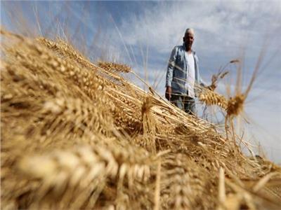 التموين: 22 شركة تقدمت لمناقصة توريد الأرز الأبيض المستورد