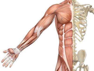 أطعمة ومشروبات تعزز نمو العضلات وتساعد على تقويتها