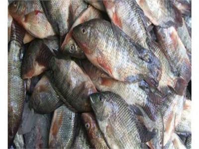 ضبط 8 أطنان أسماك فاسدة داخل مخزن في السويس