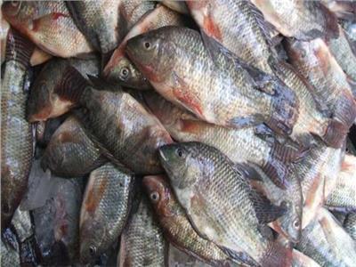 ننشر أسعار الأسماك والبلطي يسجل 26.50 جنيه