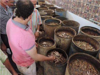 الصحة: إعدام 5 أطنان فسيخ ورنجة فاسدة.. وإغلاق 200 منشأة غذائية