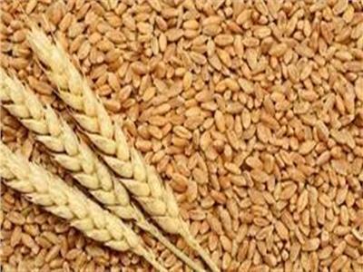 تحذير من التموين لمزارعي وموردي القمح
