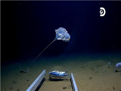 شاهد| العثور على كائن غريب فى أعماق المحيط الهادي