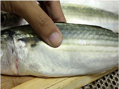 قبل «شم النسيم».. الزراعة توضح شروط صلاحية الأسماك الطازجة
