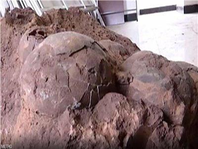 بالصور| العثور على «بيض ديناصور» عمره 145 مليون عاماً