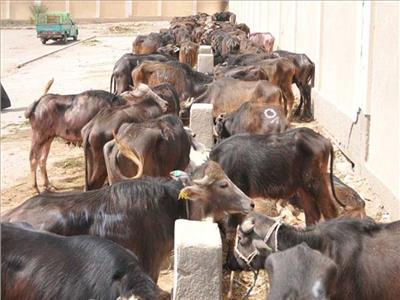 «الزراعة» تعتمد 59 مليون جنيه لـ 368 مستفيدا جديدا في مشروع البتلو