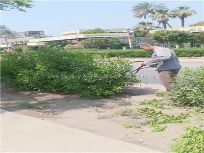رفع كفاءة وتجميل «حدائق الغلابة» بحي شرق شبرا الخيمة