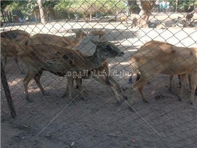 شاهد| صغار الكنغر والكبش والمها.. حديقة الحيوان ترتدي ثوب البهجة