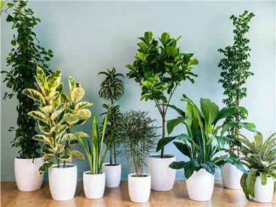 10 نباتات منزلية تساهم في تنقية الهواء.. تعرف عليها
