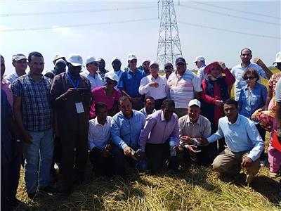 أعضاء مركز الأرز الإفريقي يتفقدون حقول الأرز الإرشادية بمحطة بحوث سخا بكفر الشيخ