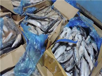 «الزراعة»: ضبط أكثر من 99 طن سمك ماكريل فاسد بالجيزة