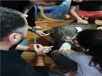 فريق طبي بسيناء ينقذ «سلحفاة بحرية» من الانقراض