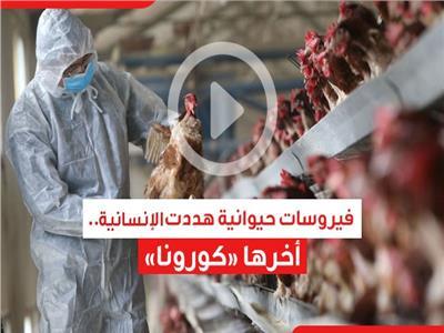 فيديوجراف  فيروسات حيوانية هددت الإنسانية.. آخرها «كورونا»