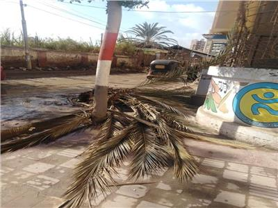 بسبب سوء الأحوال الجوية.. سقوط نخلة بمدرسة في المحلة دون إصابات