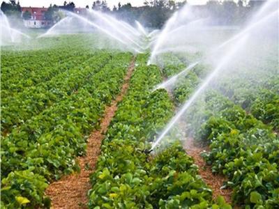 «الزراعة» تنصح المزارعون بإتباع توصياتها لمواجهة الآثار السلبية للطقس