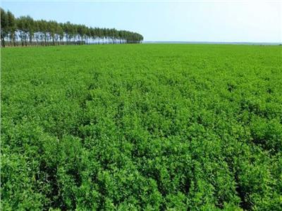 للمزارع.. كيف تتعامل مع محاصيل الأعلاف الخضراء خلال يونيو؟