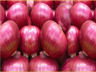 «البصل» يحتل المركز الثالث في الصادرات الزراعية المصرية لأسواق العالم