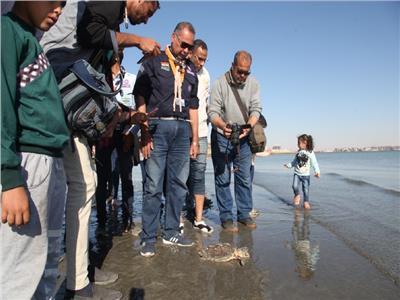 حكايات| رحلة لإنقاذ «الترسا».. لماذا يعيد تجار الأسماك السلاحف للبحر؟