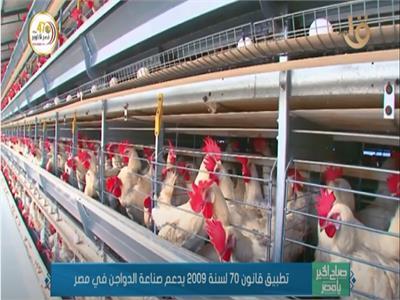 فيديو| «يوفر 3 ملايين فرصة عمل».. تعرف على مزايا تنظيم تداول الطيور الحية