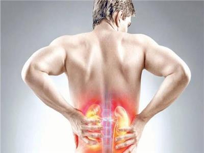 «كبسولة طبية».. مكان ووظائف الكلى في الجسم