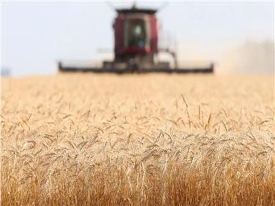 وزير التموين: توقعات باستلام 4 ملايين طن من المزارعين خلال موسم القمح