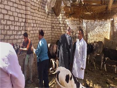 الزراعة: تحصين أكثر من مليون رأس ضد مرض الجلد العقدي وجدري الأغنام