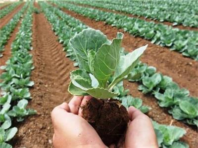 نقيب الفلاحين: قانون الزراعة العضوية يساهم في الحفاظ على البيئة