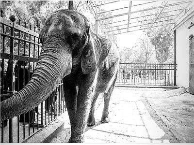 لأول مرة.. غرامة لمنع «معاكسة» الحيوانات في مصر
